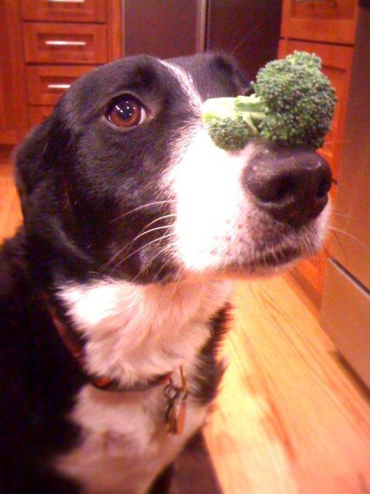cal_broccoli