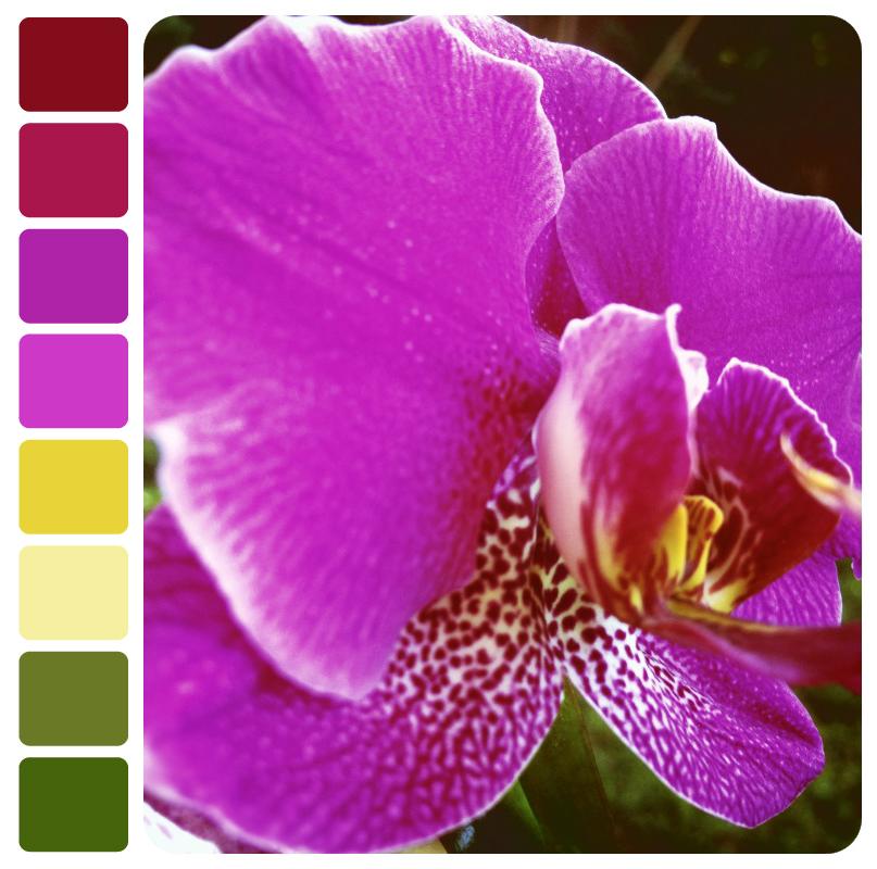 orchid_palette
