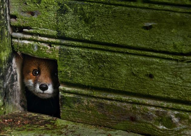 fox_house