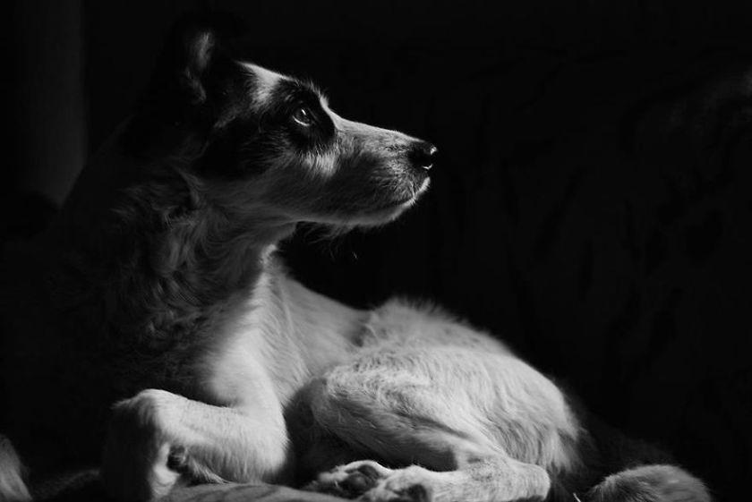 dog_story